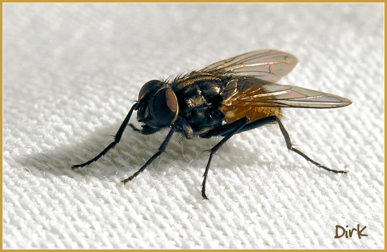 FLY (7mm)