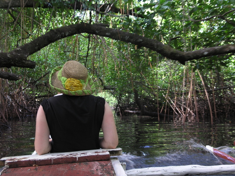 Paddling in the Mangrove