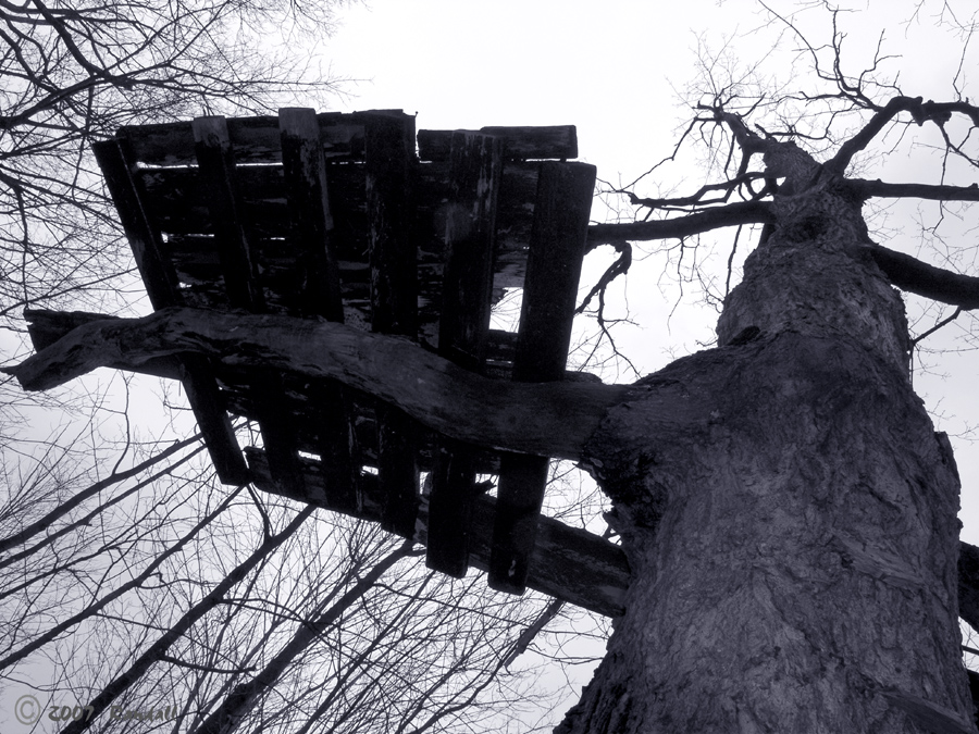 Old Tree House