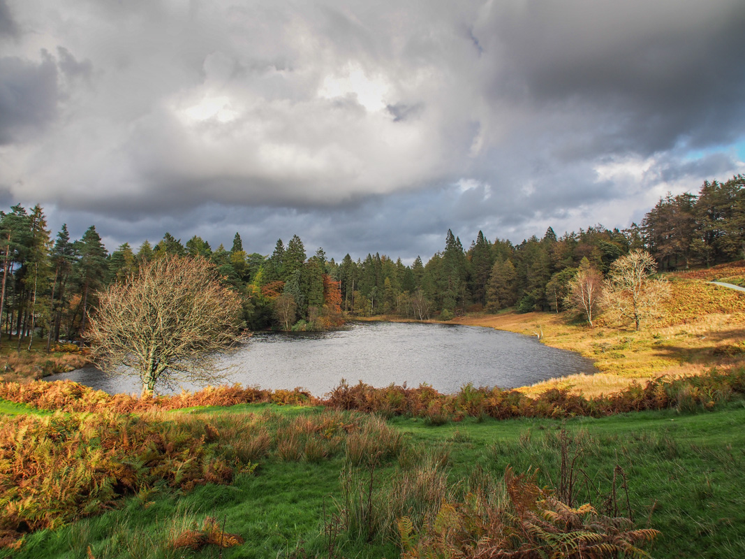 Tarn Hows English Lake District.