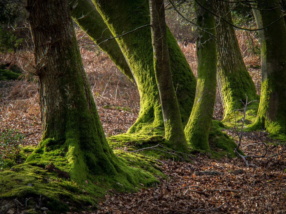 Newe Forest Trunks.