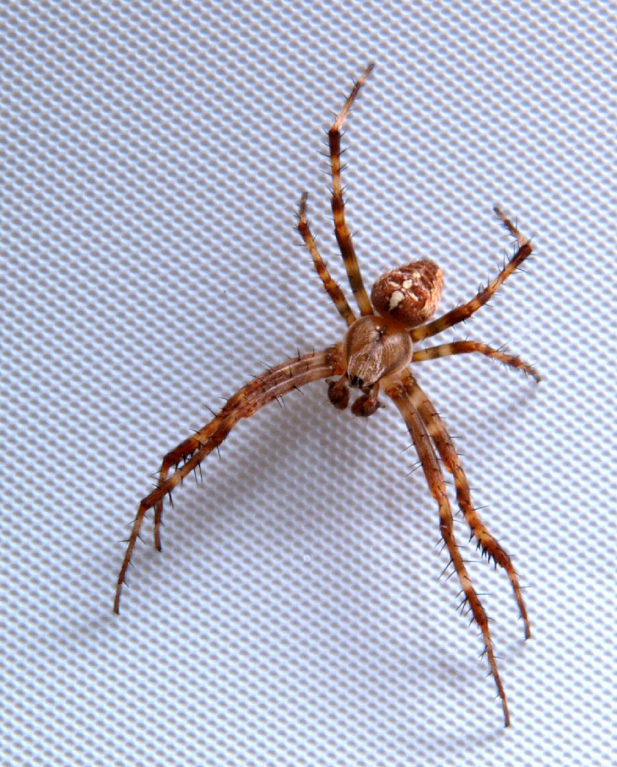 Bathroom spider