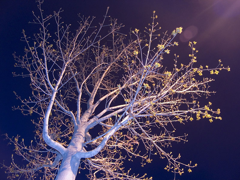 Spring Night Branches