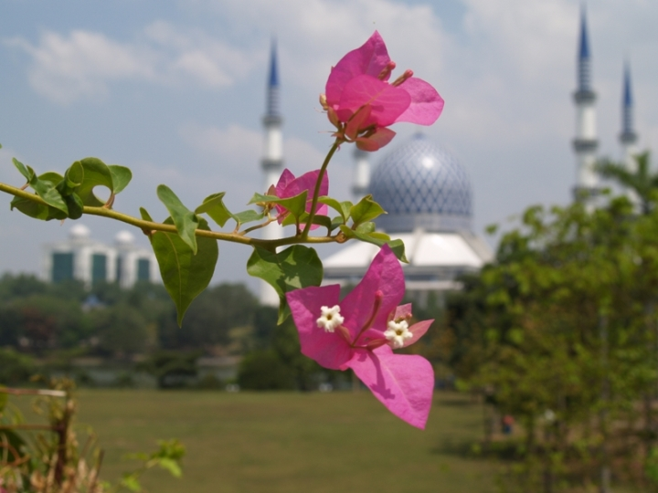 Flower.. .with a mosque background