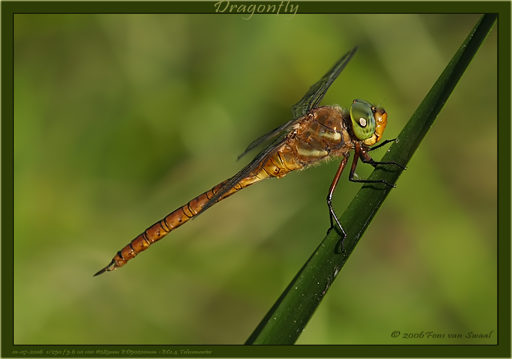 Dragonfly (7)