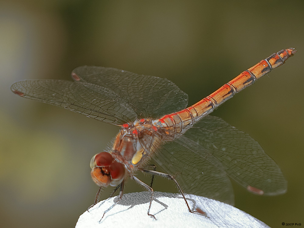 DragonFly (16)