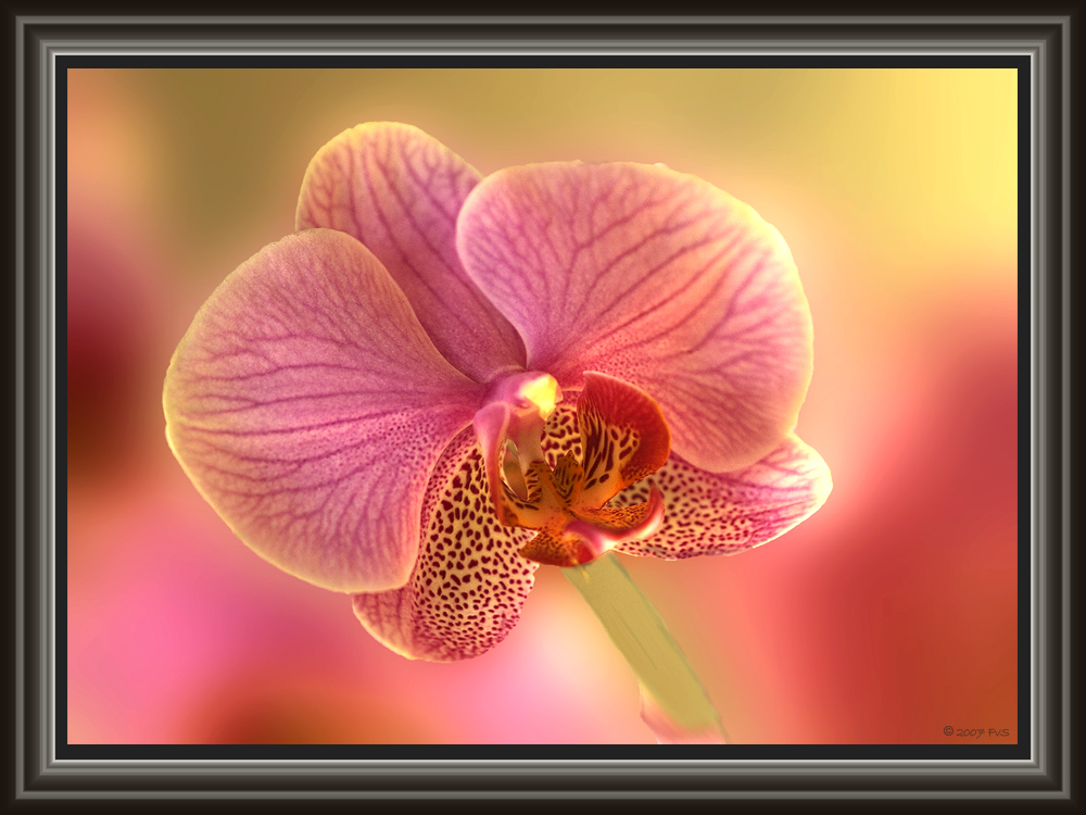 Orchid (6)