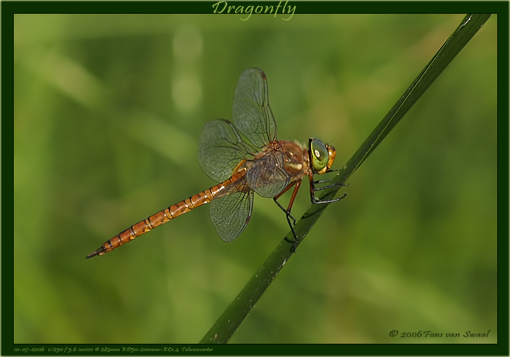 DragonFly (8)