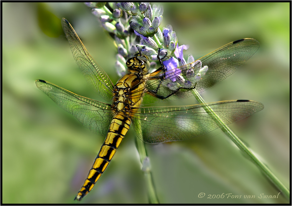 Dragonfly (10)