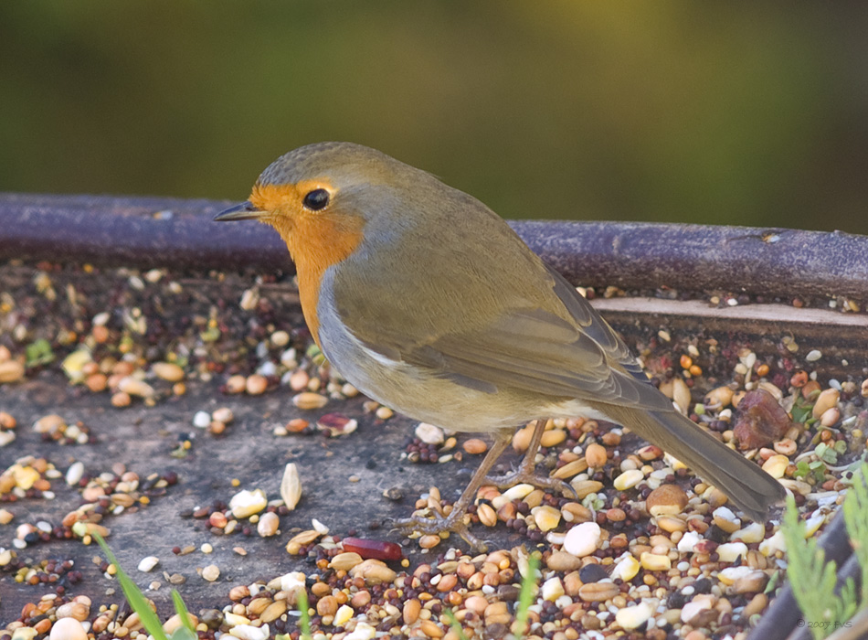 Red Robin (3)
