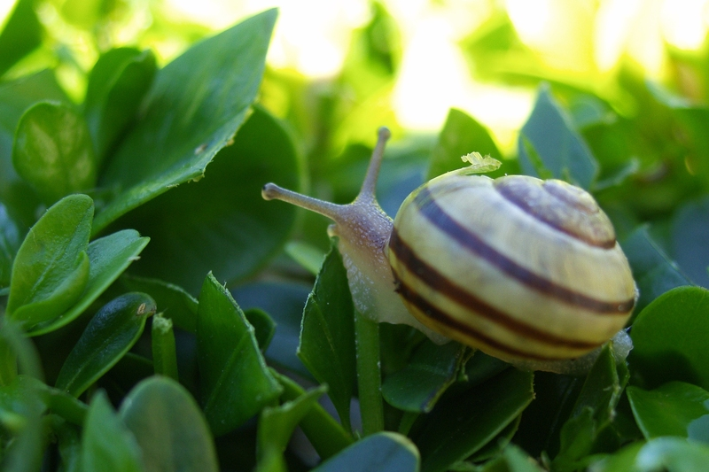 Snail (where do you want to go today)