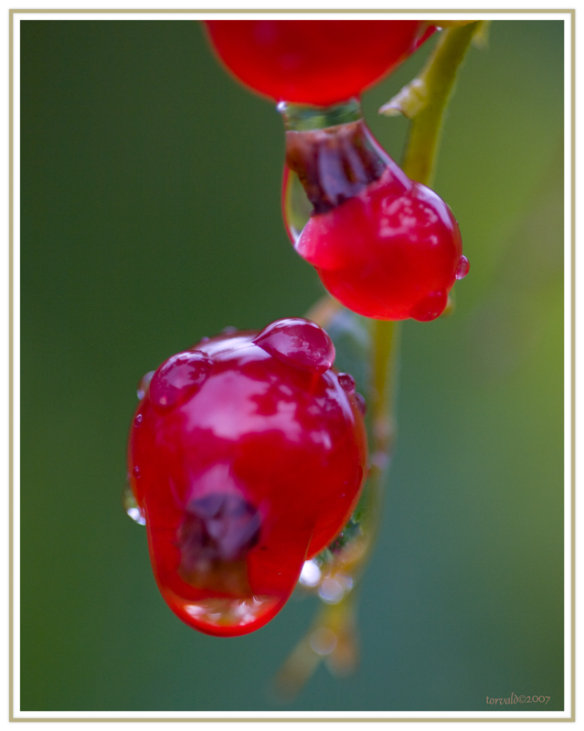 Wet currant