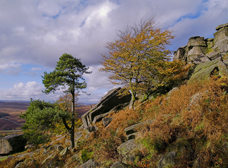 Trees on Stanage
