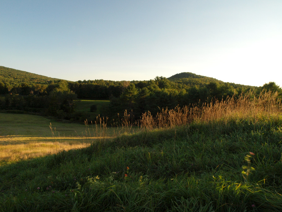 Lyme meadow in evening light