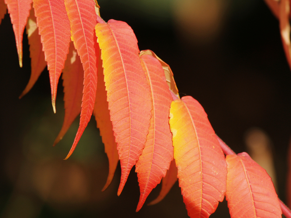 autum leaves 2
