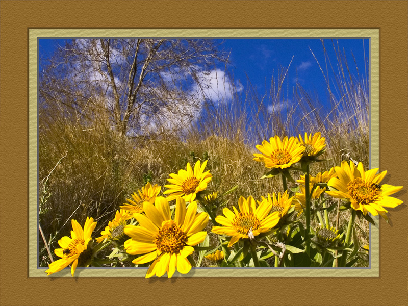 Framed Spring Sunflowers