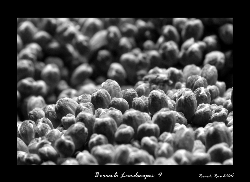 Broccoli lanscapes 4