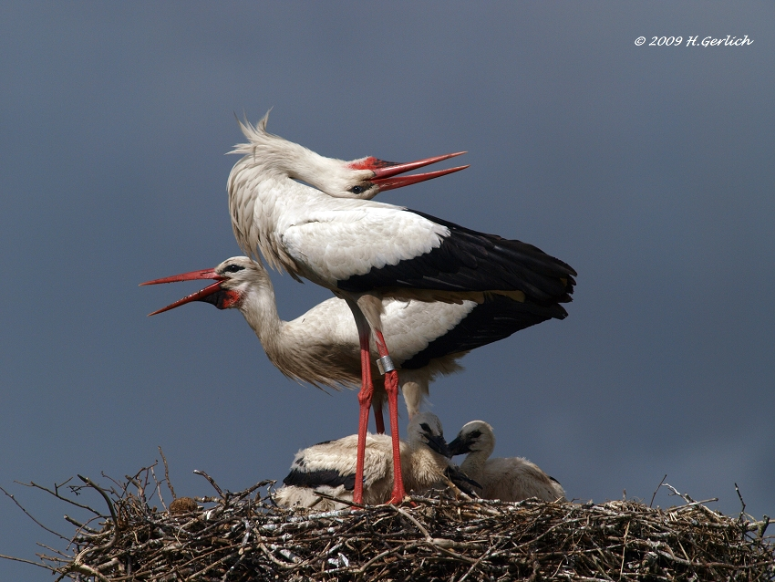 Happy Stork Family