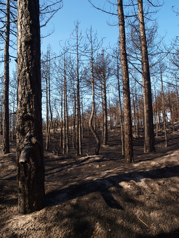 6 Weeks After The Big Fire (2)