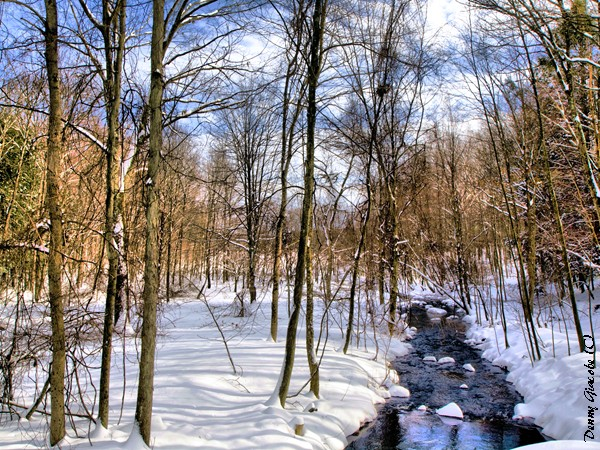 Winter Stream (2)