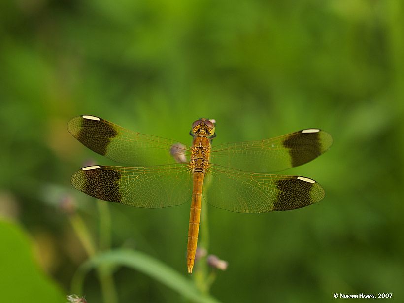 Dragonfly at Arm's Length