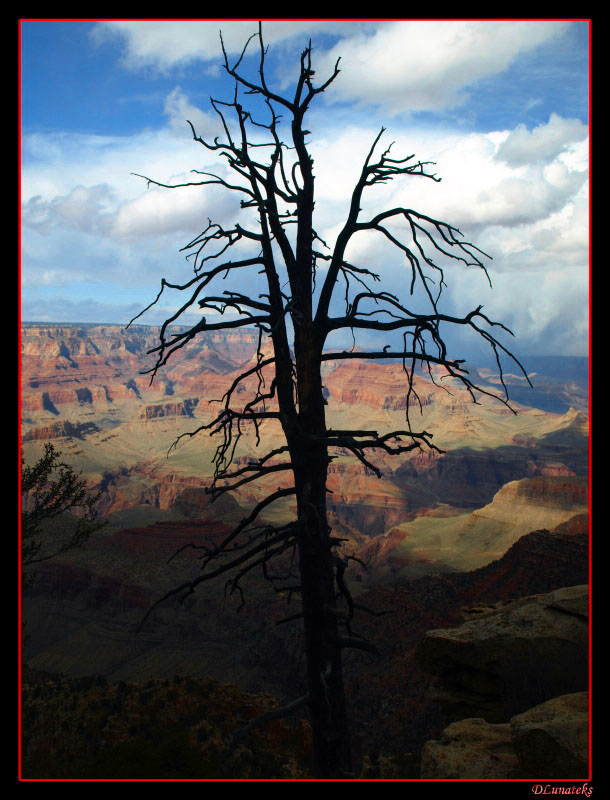 Dead Tree in the Canyon