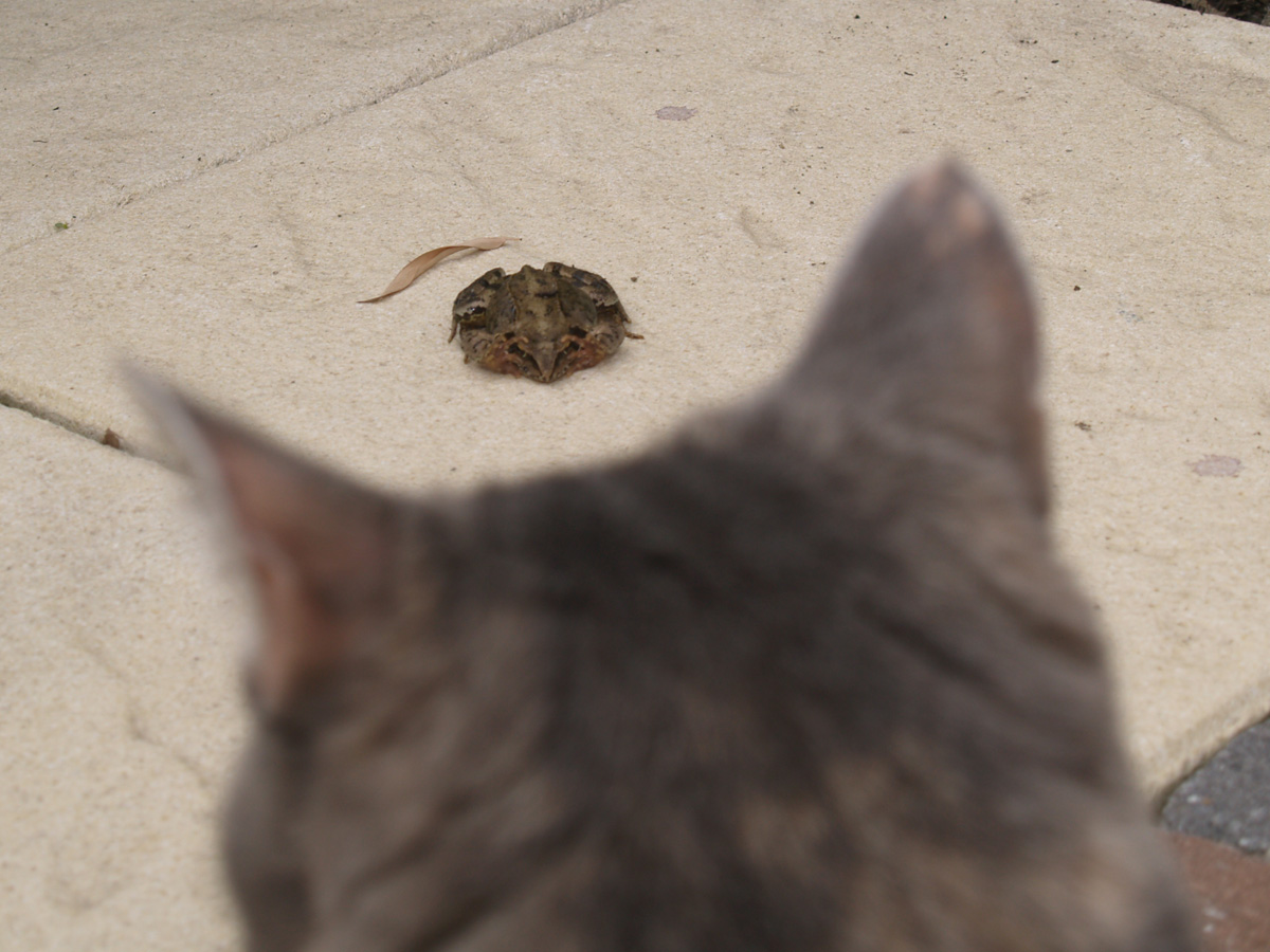 Mara meets her first frog