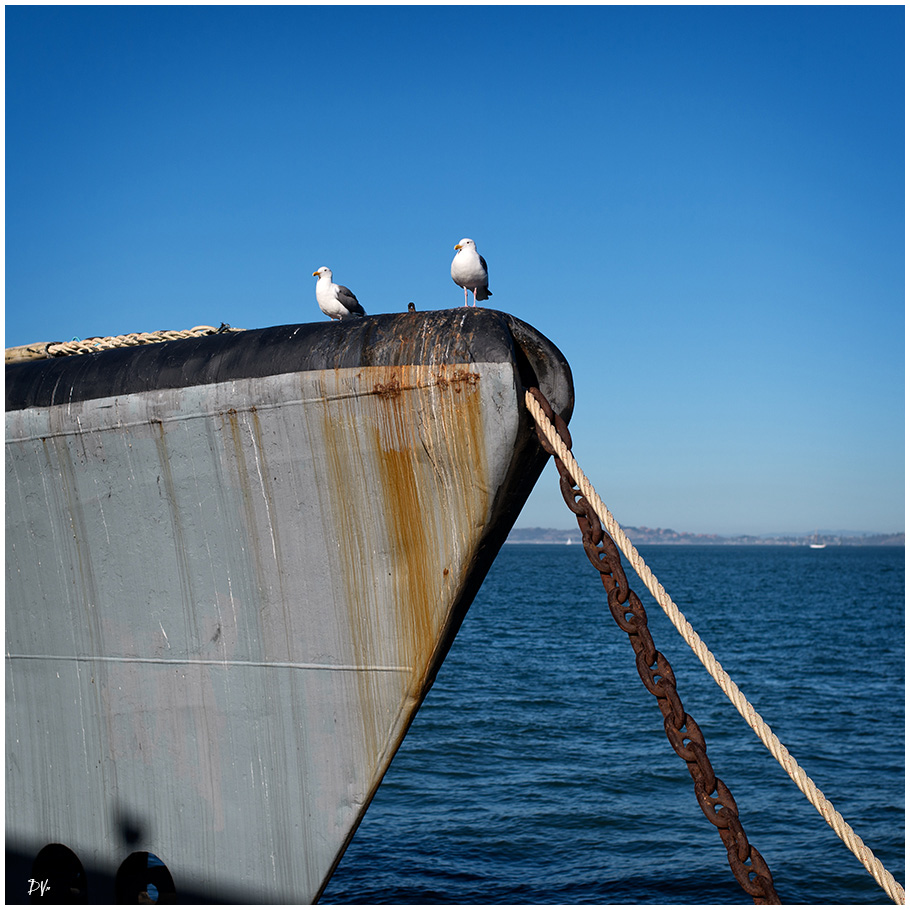 Birds on the bow